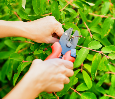landscape-pruning-in-bergen-county